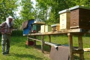 Včely v nových úľoch